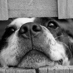 飼いやすくて人気の小型犬ランキング!マンションの室内におすすめは?
