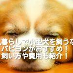 [一人暮らしにおすすめの小型犬 ③]パピヨンの飼い方や費用は?