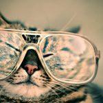 一人暮らしで飼いやすい猫おすすめランキング!女性にも人気のネコは?