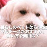 [一人暮らしにおすすめの小型犬 ④]マルチーズの飼い方や費用は?